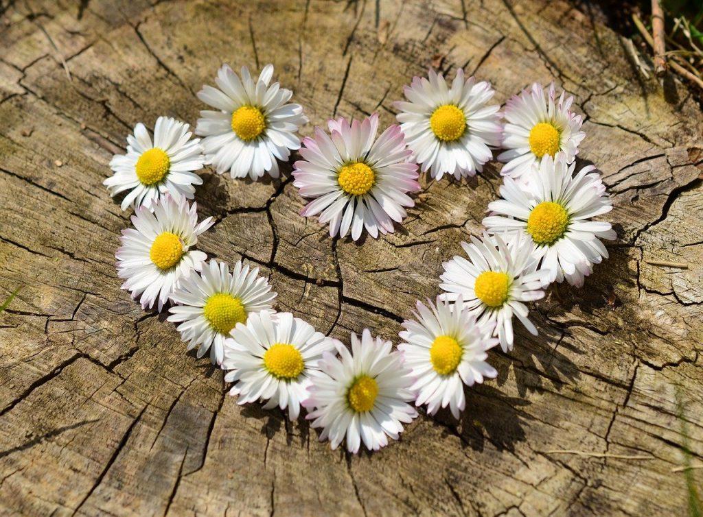 daisies, heart, flowers-712892.jpg